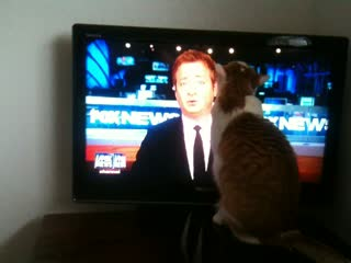 Cat loves Andy Levy