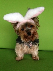 Maycee the Easter Dog!