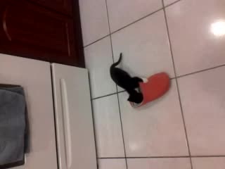 Kitten vs Slipper