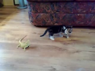 Kitten vs. Lizards