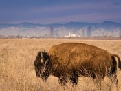 Rocky Mountain Arsenal National Park