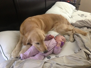 Dog and baby asleep