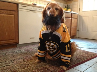 Bearded Bruins Dog
