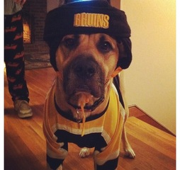Boston Bruins 4 Legged Fan