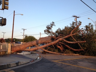 Large Tree Across Road