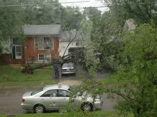 Tree falling during the storm in Springfield VA