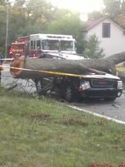 Tree versus a car