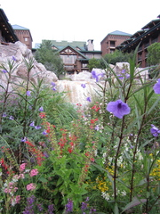 Spring at Disney's Wilderness Lodge Resort