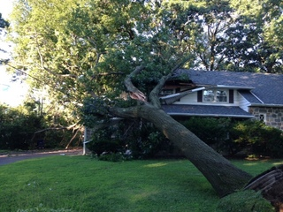 Tree falls into house