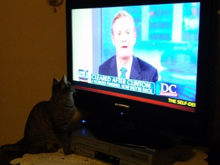 Cat loves Fox News