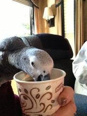 African Grey Coffee Day