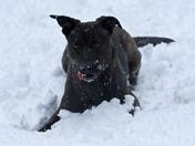 Maddie in the Snow - Brandon
