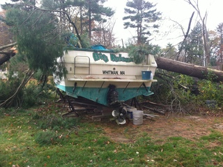 Giant pine tree crushes boat