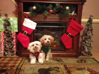 Ready for Christmas!!!!(animals)