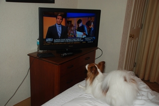 My dog's hooked on Fox