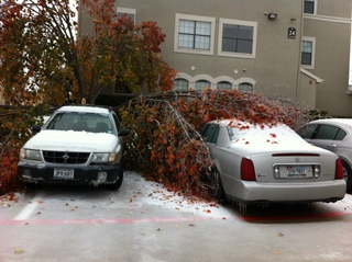Tree stuck to the car in Dallas