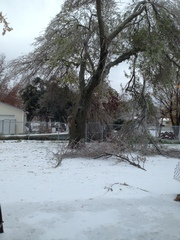 Branches down in Duncanville, TX