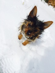 Pup in the snow