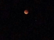 Blood moon pic