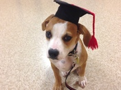 Rhett, rescue dog, graduates at Pet Smart Puppy Class Shops at Greenridge