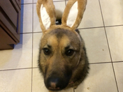 The Other Easter Shepherd