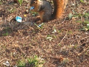 The squirrel that crashed the egg hunt