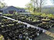 Getting the plant nursery ready for Spring