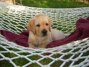 Remington relaxing in the hammock