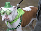 Levi wishes you a happy st pattys day