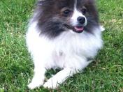 Foxy Cleo