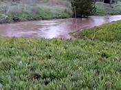 Creek Surface Near Kern Street Level
