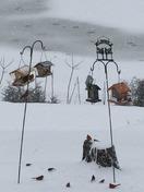 Birds in the snow
