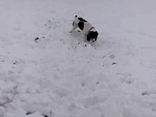Lily loves the snow