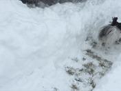 Dash Snow Day
