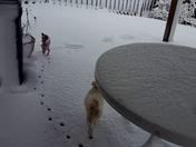 Funny snow/dog Video