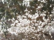 snow in the mountains/Hillsville, Va.