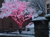 Valentine Lights in the Snow