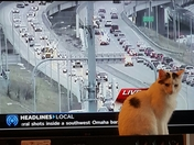 Muffy is helping with the traffic report this morning!