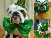 Happy St. Patrick's Day EveryBully