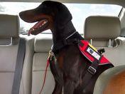 VA combat vet is disrespected with service dog!