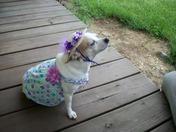 Miss Pichachiu Boo Boo in her Derby finery