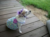Boo Boo in her fine derby outfit