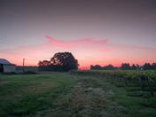 Sun Rise on Vineyard