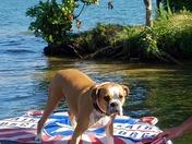 Abby has a fun day at Belews Lake
