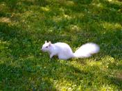Fwd: Squirrel photos