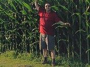 9 ft Tall Corn Stalks