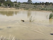 Mao and Gypsy staying cool @ WHITE FACE MOUNTAIN, NEW MEXICO