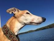 Charlie Loves the Lake LIfe