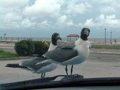 Gulls ask for WDSU Weather Report for Pass Christian