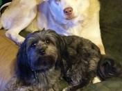 Nana and Gizmo / National Dog Day